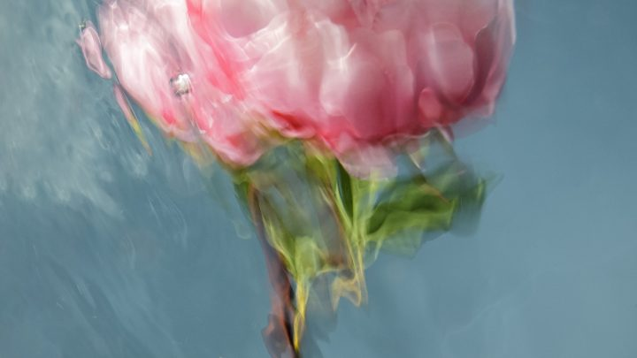 Dreamy Pictures of Flowers