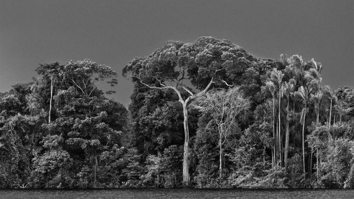 Amazônia : the New Book of Sebastião Salgado