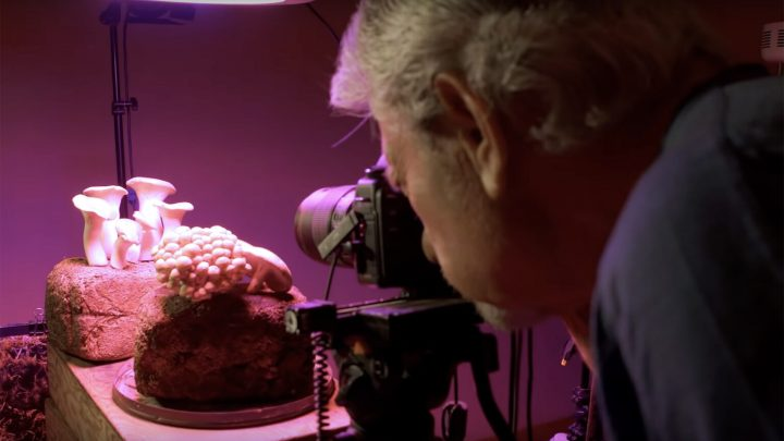 Behind the Scenes of Fantastic Fungi Netflix Documentary